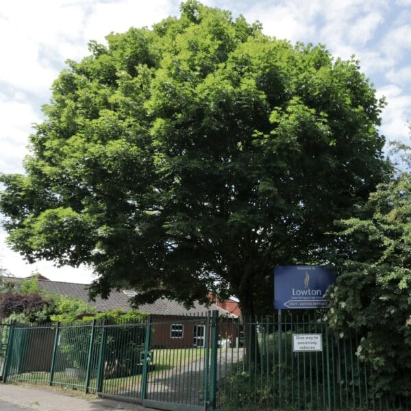 Arboricultural Impact Assessment: Lowton High School, Wigan