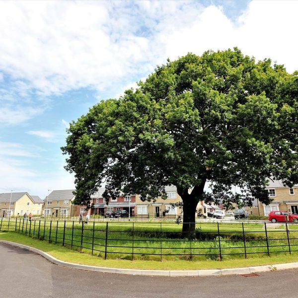 Arboricultural Consultants