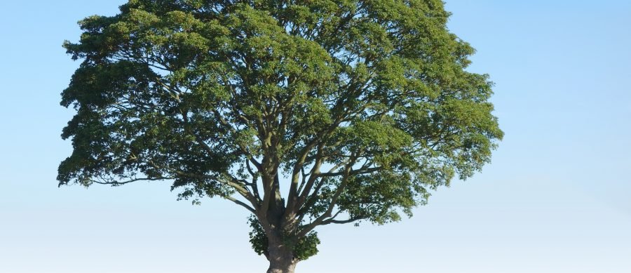 A Homeowner's Guide to Trees—What You need to Know