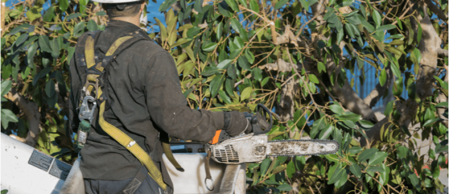 What Is An Arboricultural Consultant?