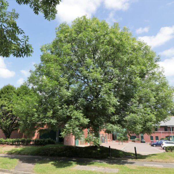 Arboricultural Impact Assessment: Pencroft Way, Manchester